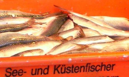 Leidenschaft verbindet Angler über Grenzen