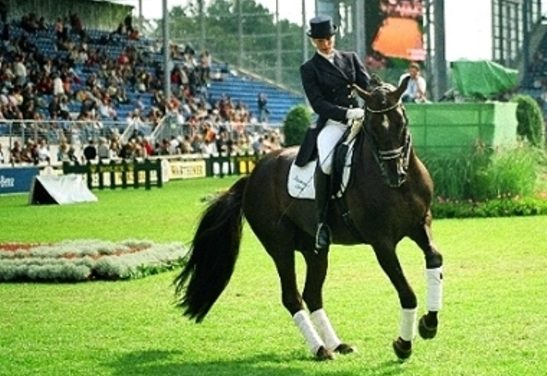 Der Reitsport in M-V: Zwischen olympischen Traditionen und dem Galopp-Rennsport